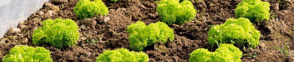Peschiera, a San Bovio si potrà acquistare verdura a chilometri zero, e in futuro…
