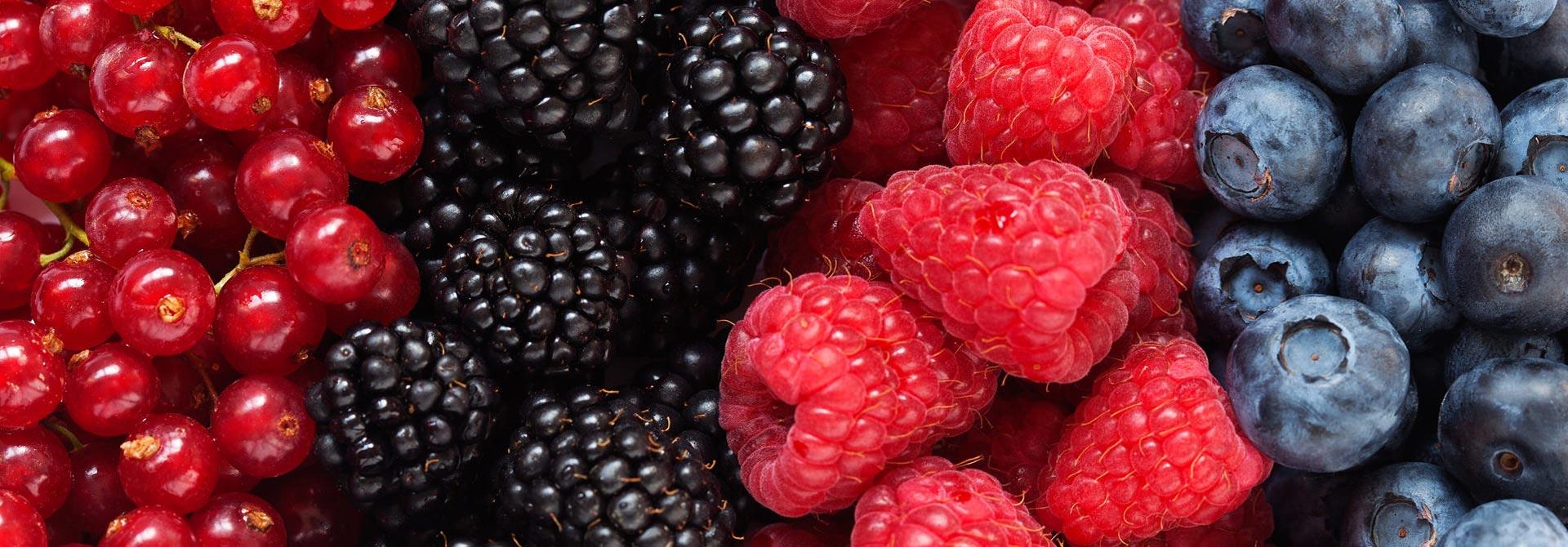 Raccolta piccoli frutti
